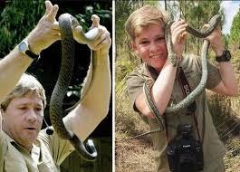 Al hijo del cazador de cocodrilos lo mordió una serpiente: video ...