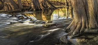 stream creek sunrise cypress