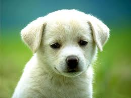 cute dog hd wallpapers top free cute