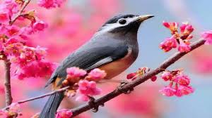 beautiful birds wallpapers you