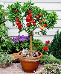 best fruits to grow in pots fruits