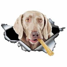 618997960 Dawasaru Weimaraner Dog Torn Metal Car Sticker Personalized Decal Laptop Motorcycle Auto Accessories Decoration Pvc 13cm 8cm Automobiles Motorcycles Exterior Accessories