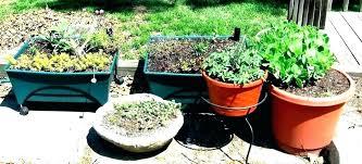 herb garden boxes gympiemedical com