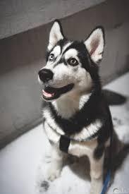 صور الكلاب النادرة الأليفة والشرسة