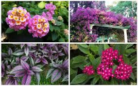 10 perfect florida perennials garden