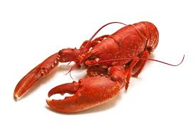 New lobster emoji causes some to snap ...