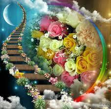 صباح الورد مع صور ورود جميلة جدا ورومانسية صباحية