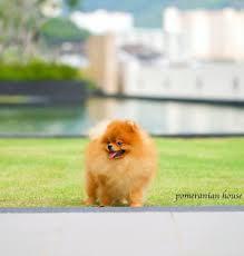 Pomeranian House - Home