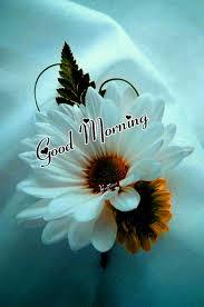 good morning good morning flower