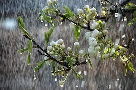 فعالیت یک سامانه بارشی جدید در کشور