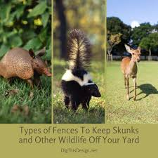 Types Of Fences To Keep Skunks And Other Wildlife Off Your Yard Dig This Design