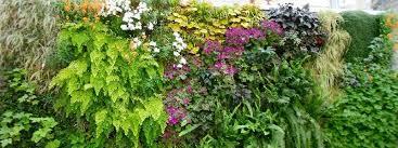 ornamental plants for vertical garden
