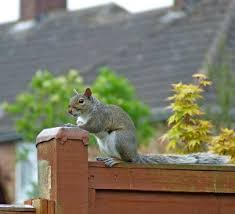 squirrel repellent to save your fall bulbs