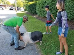 THAT'S SOME PIG! | Jamestown Press