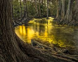 wallpaper sunlight landscape water