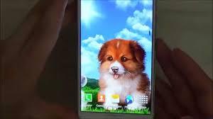 puppy wallpaper free live wallpaper