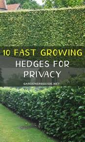 10 Fast Growing Hedges For Privacy Gardenersguide Gardening Privacy Privacyhedges In 2020 Fast Growing Hedge Fast Growing Hedge Plants Privacy Hedges Fast Growing