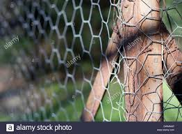 Rusty Metal Corner Fence Post Visible Behind A Wire Chain Link Fence Stock Photo Alamy
