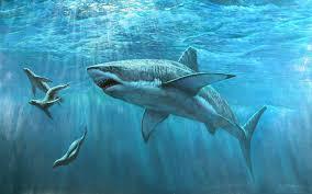 تحميل خلفيات تحت الماء القرش الأبيض الأختام أسماك القرش عريضة