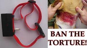 Petition Australian Federal Government Australian State Governments Ban Electric Shock Collars Including Those Associated With Invisible Fence Barriers From Use On All Companion Animals Change Org