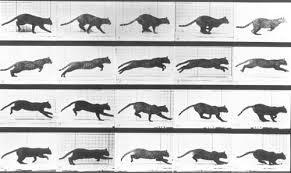 Eadweard Muybridge Photographer | All About Photo
