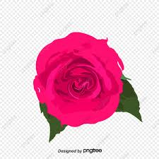 flower png transpa clipart image