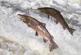 Pêche au saumon en Alaska il y a 11 500 ans - Hominidés