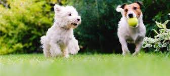 Smartfence Outdoor Hidden Dog Fences Dogwatch