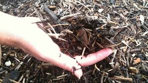 clay soil 5 tips for making your