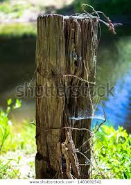 Old Fence Post Wrapped Barbed Wire Stock Photo Edit Now 1483692542