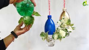 money plant growing in plastic bottles