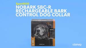 Sportdog Nobark Sbc R Waterproof Rechargeable Dog Bark Collar Chewy Com