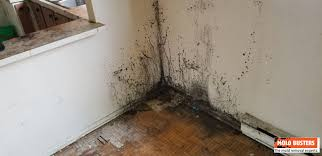what is black mold pictures