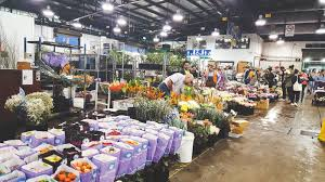 a guide to the sydney flower market 8
