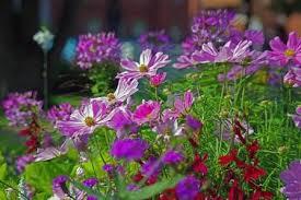 summer bedding plants list