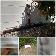 Snake Removal And Prevention Methods Wildlife Removal Services