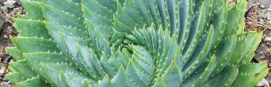 plant list agave bromeliads and