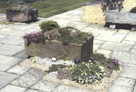 alpines in troughs and sinks