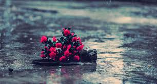 صور ورد مع مطر