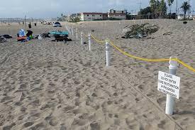 Toes Beach Dunes Begin Recovery The Argonaut Newsweekly