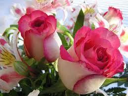 حلوة وردة الوان رائعة وجذابة للزهور صور حلوه
