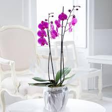 orchids orchid flower bouquets