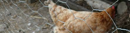 Chicken Wire Galvanised Wire Mesh Fencing Plastic Coated