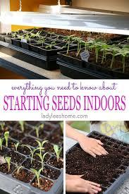 vegetable seeds indoors under lights