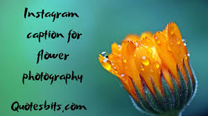 instagram caption for flower photography famous