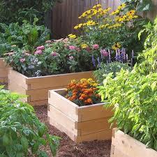 natural cedar raised garden bed 2