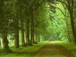 cool nature bacground photo