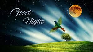 whatsapp status good night video