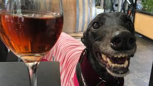 Petition · Keep our furry friends in bars in Melbourne, Victoria ·  Change.org