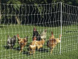 Poultry Electric Netting For Chicken Security Electric Fence Energizer Agricultural Solar Fence Energiser Factory And Suppler In China Shenzhen Tongher Technology Co Ltd